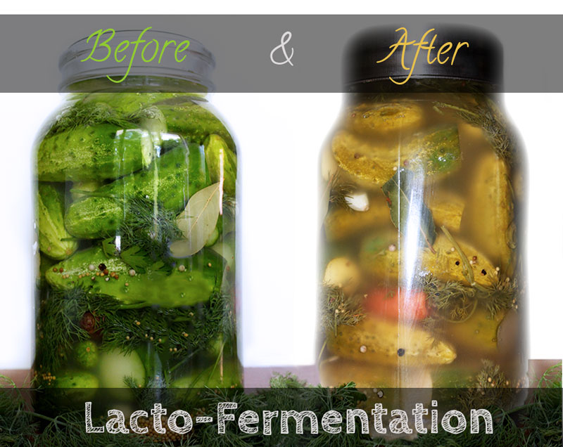 Pickles-Before-and-After-fermentation-1