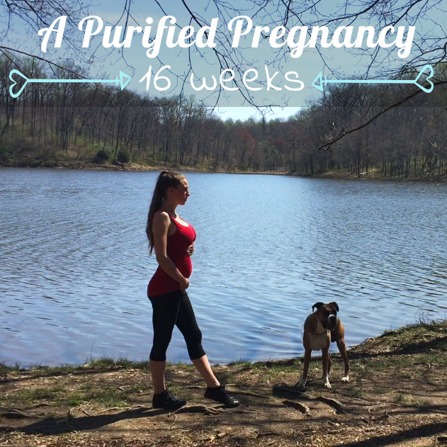 16 weeks pregnant